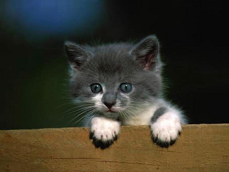 a788e4ff76bba Vous aimez les Chats comme Bunny - Je vous présente  Le petit chat